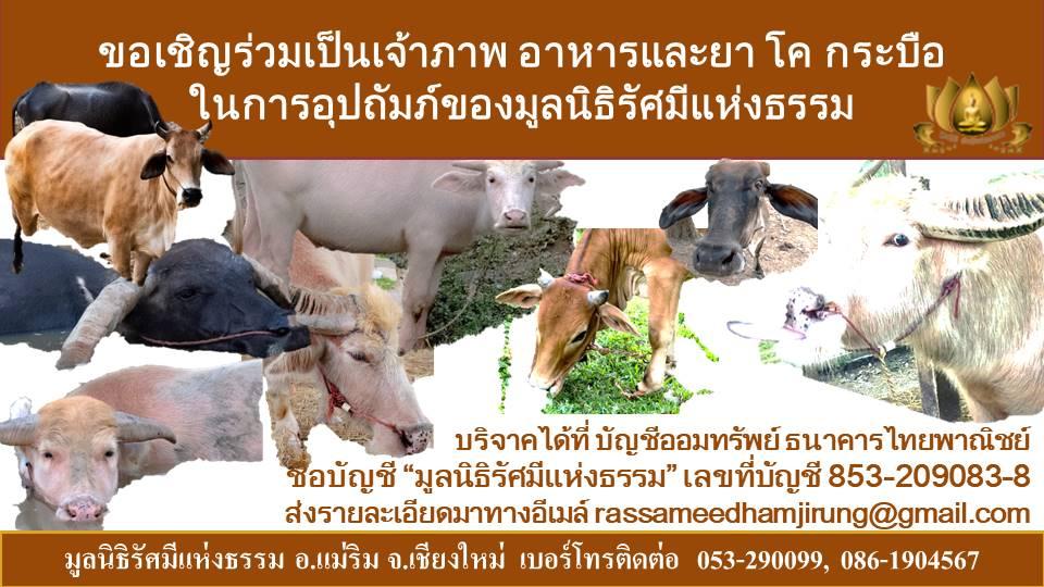 โครงการอาหารสัตว์
